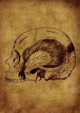 Anatomic24