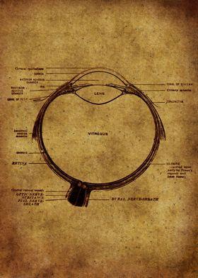 Anatomic26