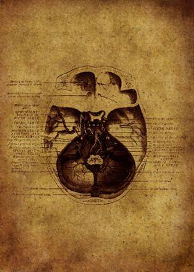 Anatomic25