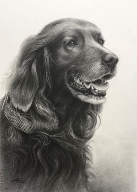 """""""Choco"""" charcoal pencil on paper"""