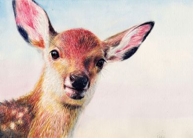 """""""Fawn"""" watercolor pencil on paper"""