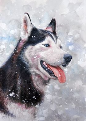 """""""Husky""""  watercolor pencil and white gouache on paper"""