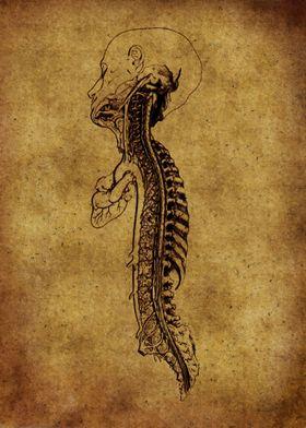 Anatomic29
