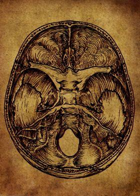 Anatomic39