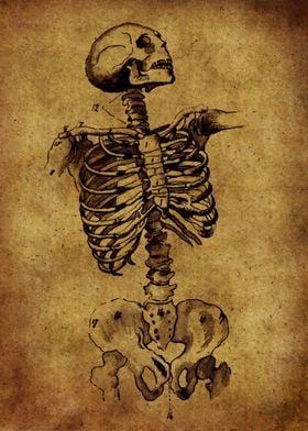 Anatomic36