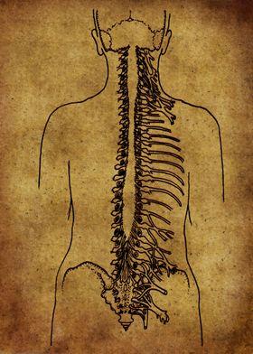 Anatomic33