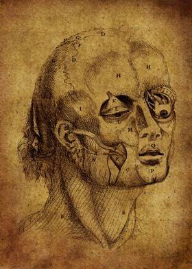 Anatomic38