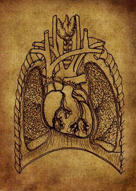 Anatomic42