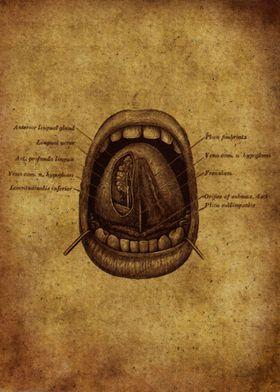 Anatomic47