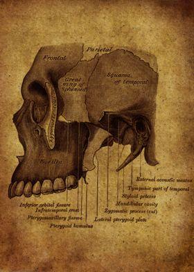 Anatomic51