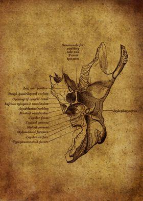 Anatomic54