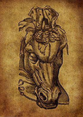 Anatomic45