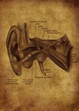 Anatomic49