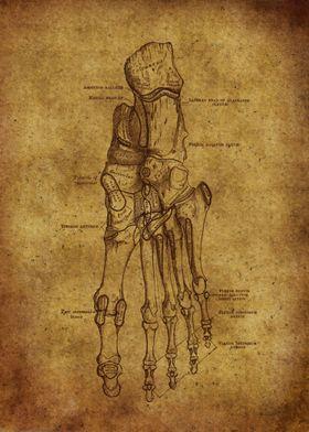 Anatomic55
