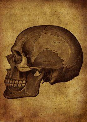 Anatomic52
