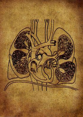 Anatomic43