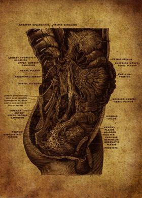 Anatomic50
