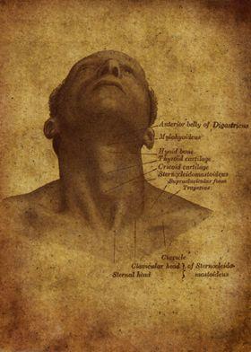 Anatomic61