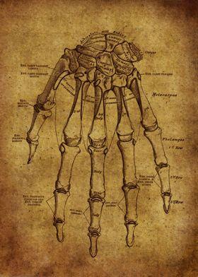 Anatomic58