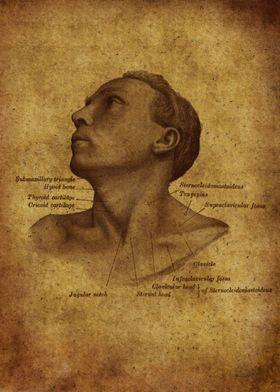 Anatomic62