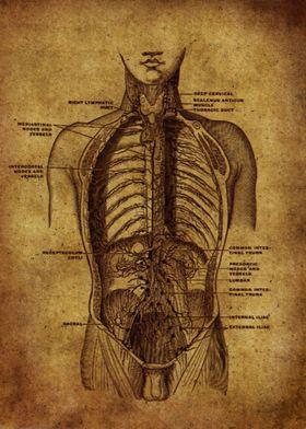 Anatomic59
