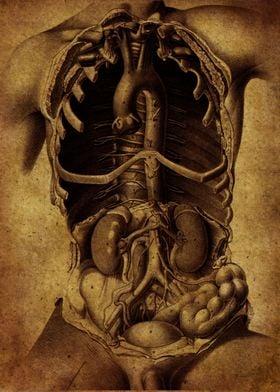 Anatomic66