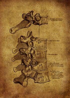 Anatomic65