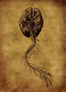 Anatomic68