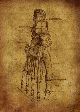 Anatomic56