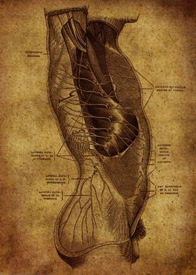 Anatomic64