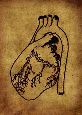 Anatomic71