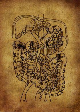 Anatomic73
