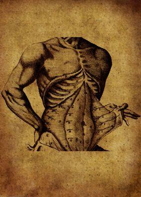 Anatomic78