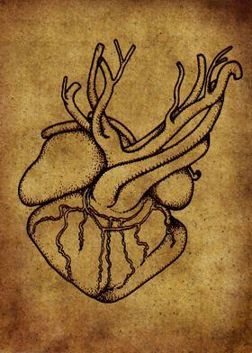 Anatomic69