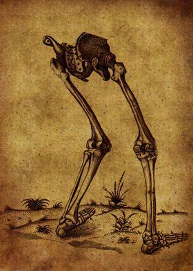 Anatomic75