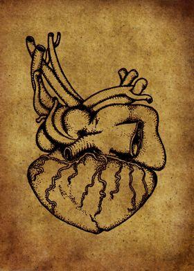 Anatomic70