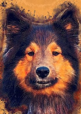 Dog Barry