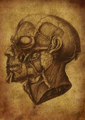 Anatomic79
