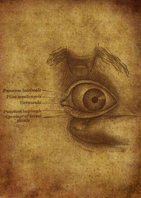 Anatomic85