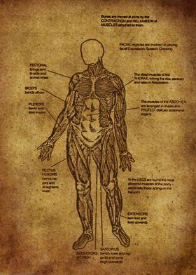 Anatomic83