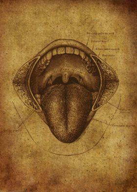 Anatomic84
