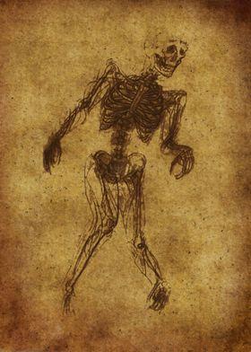 Anatomic82