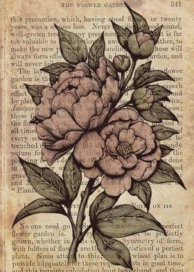 Botanical peonies illustration by Medusa Dollmaker, edi ...