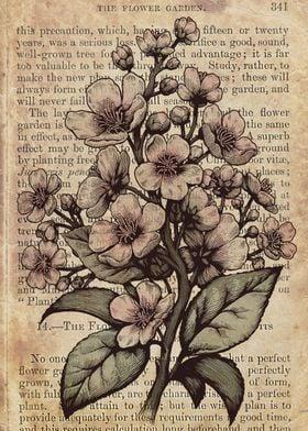 Botanical cherry blossom tree illustration edited as co ...