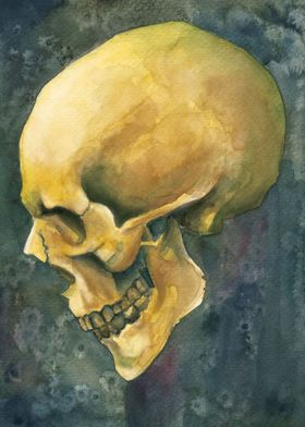 skull watercolour painting #8 for a skull watercolor pa ...