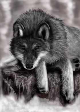 Wolf relaxing in a cold day...