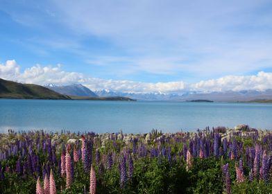 Lake Tekapo - New Zealand Dez/2016