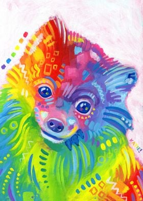 Cookie, my Rainbow Pomeranian