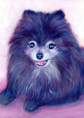 Cookie, my Purple Pomeranian