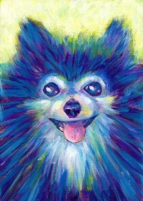 Sunshine Pomeranian